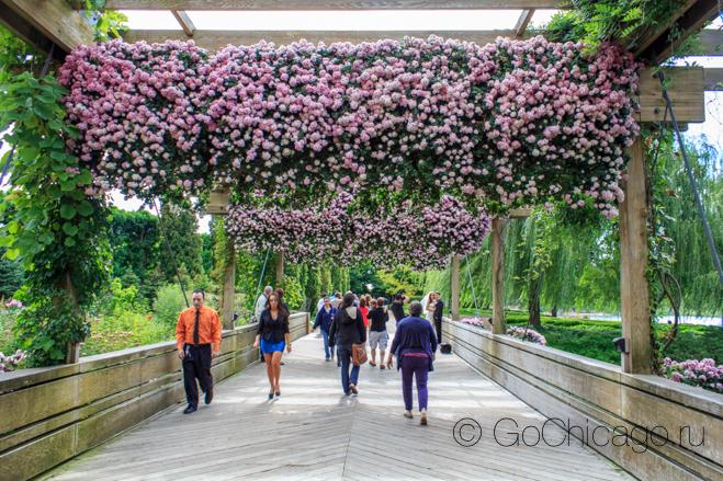 GoChicagoRU-3990.jpg