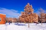 Фотографии Чикаго Зимой / Фотодайджест одного дня в декабре