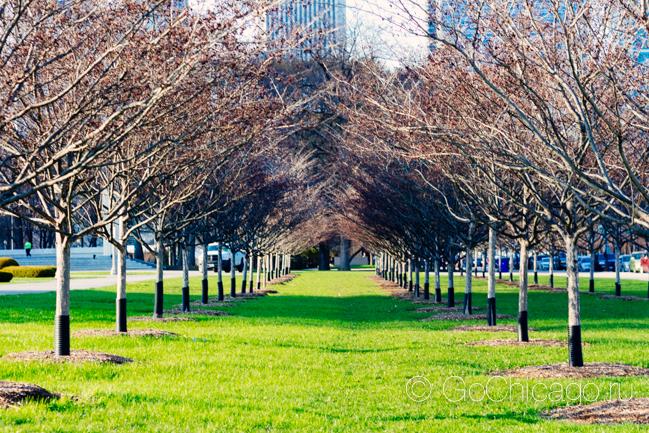 Фотографии Чикаго весной/ Фотодайджест за выходные 19-20 апреля