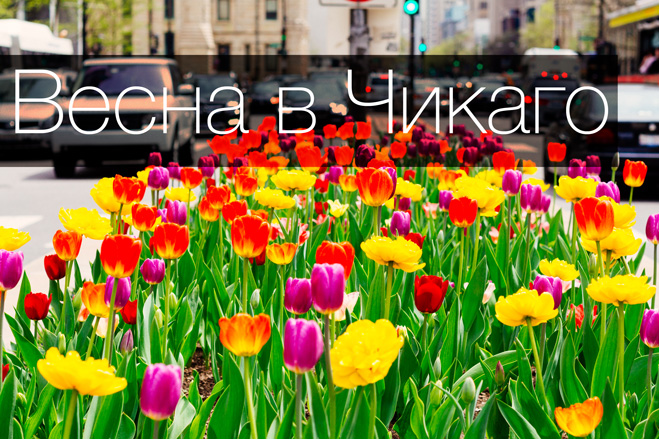 Весна в Чикаго